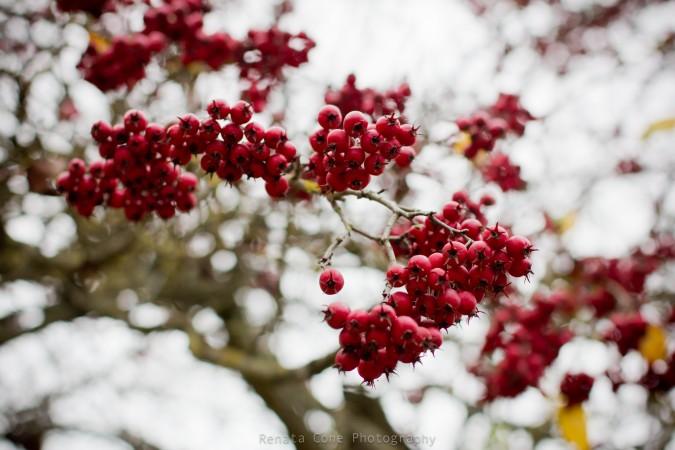 pretty fall - autumn - winter