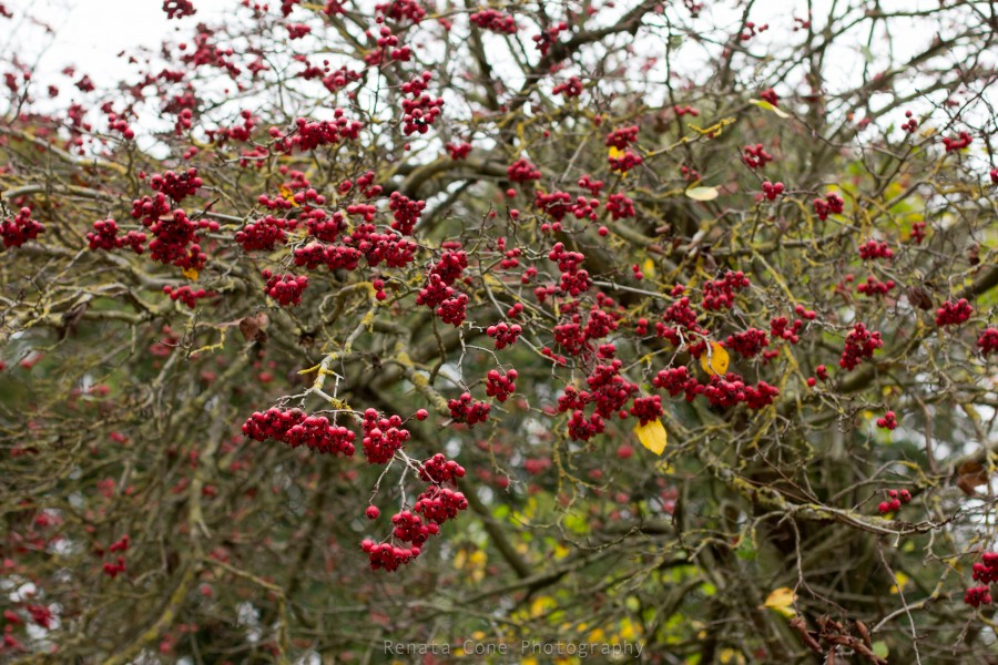 london-english autumn-landskape- phototgrapher