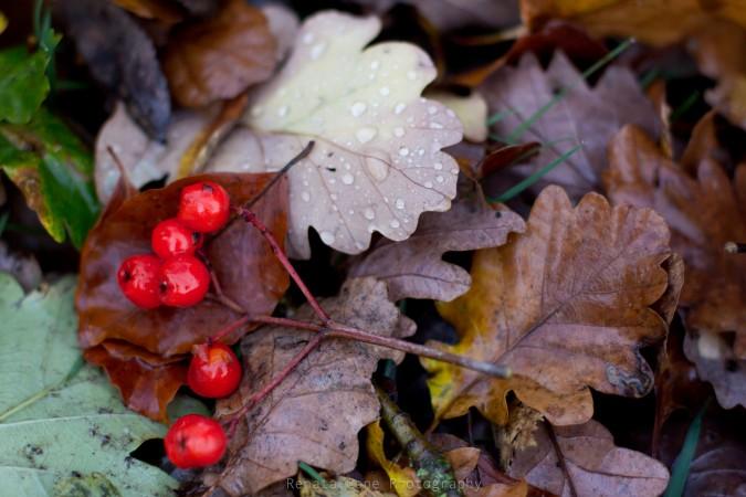 fall - autumn leaves - rain - London