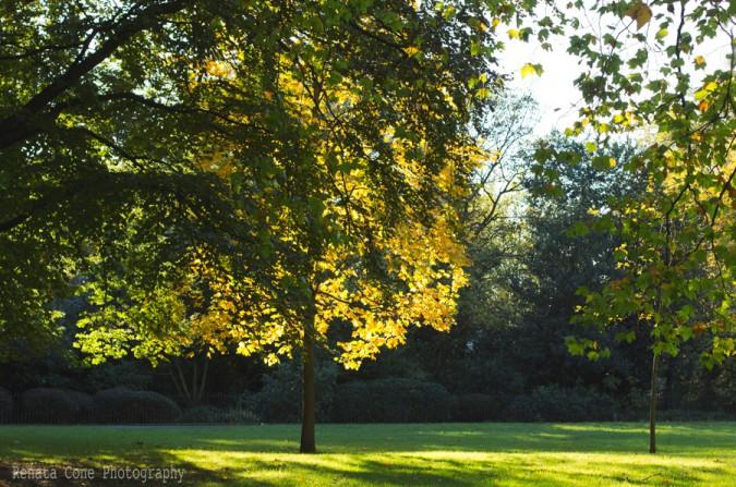 fall-beautiful autumn-england park-hide park-houston photographer