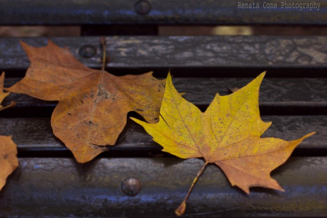 fall-autumn-travel photographs-houston photographer