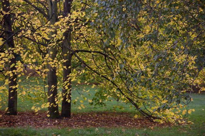 autumn-fall-yellow trees-hide park-england-houston photographer