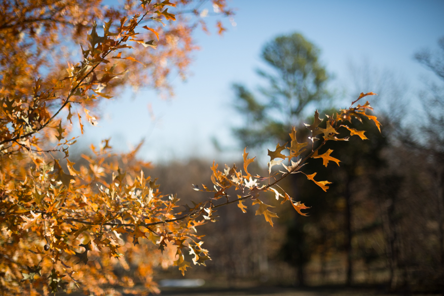 park - autumn