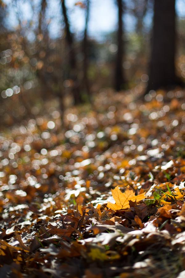 autumn - park
